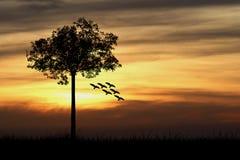 Schattenbild des Baums und der Vögel Stockfoto