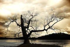 Schattenbild des bloßen Baums Stockfotografie