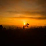 Schattenbild des Fotografen Foto machend Stockbilder