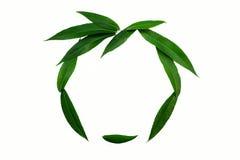 Schattenbild des Gesichtes zeichnete mit grünen Blättern auf einem weißen Hintergrund Das Konzept der Natürlichkeit und Liebe der stockbilder