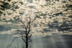 Schattenbild des getrockneten Baums Stockfotografie