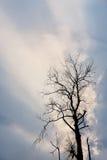 Schattenbild des getrockneten Baums mit Himmel Lizenzfreie Stockbilder