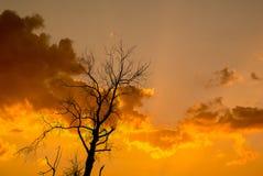 Schattenbild des getrockneten Baums mit Sonnenaufgang Lizenzfreie Stockfotos