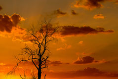 Schattenbild des getrockneten Baums mit Sonnenaufgang Lizenzfreies Stockbild