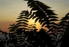 Schattenbild des Grüns bei Sonnenuntergang auf dem Meer Stockfotografie
