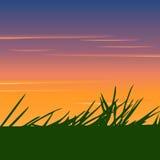 Schattenbild des Grases auf einem Hintergrundsonnenuntergang Stockfotografie