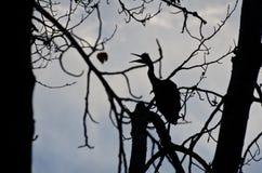 Schattenbild des Graureihers Stockbild