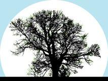 Schattenbild des großen Baums Lizenzfreie Stockfotos
