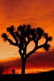 Schattenbild des Joshua-Baums am Sonnenuntergang Stockfotografie