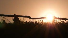 Schattenbild des jungen Landwirts in der Dorfstellung mit Sichelsensen-R?hrstangenwerkzeug im gr?nen Sommer Gro?e manuelle Ernte stock video footage