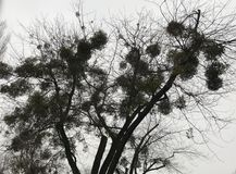Schattenbild des kühlen einzigartigen Baums gegen den Himmel lizenzfreie stockbilder