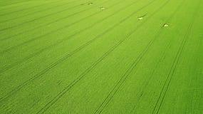 Schattenbild des kauernden Geschäftsmannes Landwirtschaftsgrünfeld von oben Lizenzfreies Stockfoto