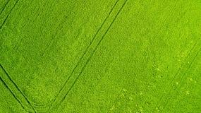 Schattenbild des kauernden Geschäftsmannes Landwirtschaftsgrünfeld von oben Stockfoto