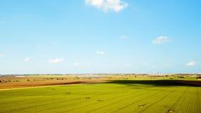Schattenbild des kauernden Geschäftsmannes Landwirtschaftsgrünfeld von oben Stockfotografie