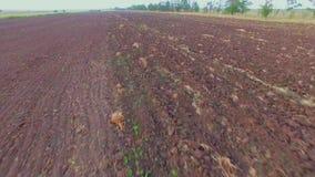 Schattenbild des kauernden Geschäftsmannes Pflug-landwirtschaftliches Feld bereit zum Säen stock video