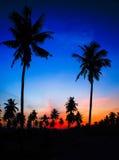 Schattenbild des Kokosnussbaums Stockbild