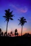 Schattenbild des Kokosnussbaums Stockfoto
