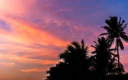 Schattenbild des Kokosnussbaums im Dämmerungshimmel mit buntem Sonnenuntergang Lizenzfreie Stockbilder