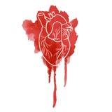 Schattenbild des menschlichen Herzens auf einer roten Stelle Stockfoto