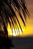 Schattenbild des Palmblattes am Sonnenuntergang Stockbild