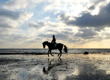 Schattenbild des Pferden-Mitfahrers galoppierend auf den Strand Lizenzfreies Stockfoto