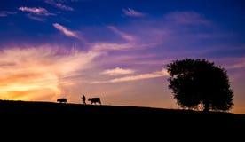 Schattenbild des Schäfers, der Kühe und des Baums gegen Sonnenunterganghimmel Lizenzfreie Stockfotos