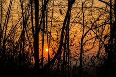 Schattenbild des Sonnenuntergangs Lizenzfreie Stockfotografie