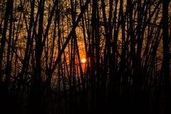 Schattenbild des Sonnenuntergangs Stockbild