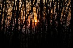 Schattenbild des Sonnenuntergangs Stockfotografie
