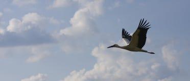 Schattenbild des Storchs im Flug - Stockbild