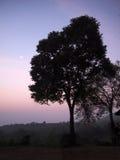 Schattenbild des toten Baums Stockfotografie