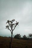 Schattenbild des toten Baums lizenzfreie stockfotografie