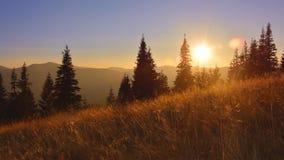 Schattenbild des trockenen Wiesengrases und -berge bei Sonnenuntergang Stockfotos