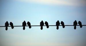 Schattenbild des Vogels auf dem elektrischen Drahtseil auf blauem Hintergrund Stockbilder