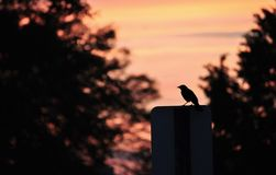 Schattenbild des Vogels auf Straßenschild lizenzfreies stockbild