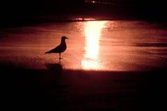 Schattenbild des Vogels am männlichen Strand Stockfotografie