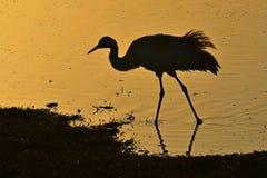 Schattenbild des Vogels am Sonnenaufgang lizenzfreie stockfotos