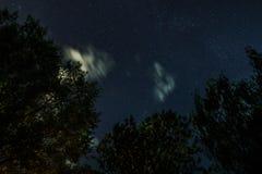Schattenbild des Waldes im nächtlichen Himmel Stockbild