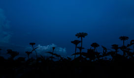 Schattenbild des Zinniagartens im blauen Himmel Lizenzfreie Stockbilder