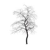 Schattenbild: ein Baum ohne Blätter Stockbilder