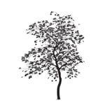 Schattenbild: eine Eberesche mit Blättern Lizenzfreies Stockfoto