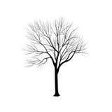Schattenbild: eine Esche ohne Blätter Stockbild
