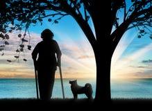 Schattenbild einer alten Frau auf Krücken und ihrem Hund Stockfotografie