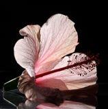 Schattenbild einer Blume Stockfotografie