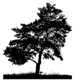 Schattenbild einer einsamen Kiefer Stockfotografie