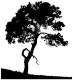 Schattenbild einer einsamen Kiefer Stockfoto