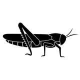 Schattenbild einer Heuschrecke oder der Heuschrecke auf einem weißen Hintergrund Lizenzfreies Stockbild