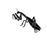 Schattenbild einer Insektengottesanbeterin in einer kämpfenden Lage Stockfotografie