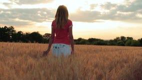 Schattenbild einer jungen Frau, die auf einem Gebiet bei Sonnenuntergang geht, Luft einatmt und die Hand eines Ährchens streicht stock video