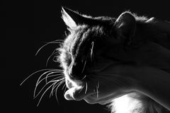 Schattenbild einer Katze legte den Kopf auf die Frau ` s Hand Lizenzfreies Stockfoto